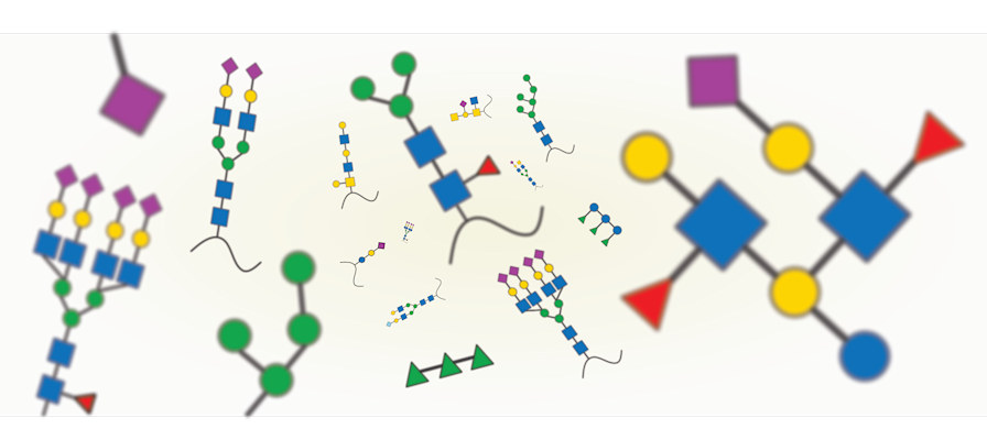 The image shows a glimpse of glycan diversity, showcasing several classes of glycans from various kingdoms of life.